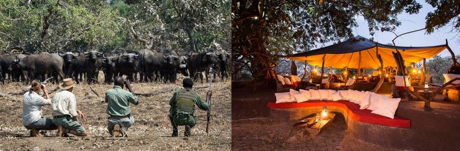 Robin Pope Safaris - photo of water buffalo and camp at Tena Tena.