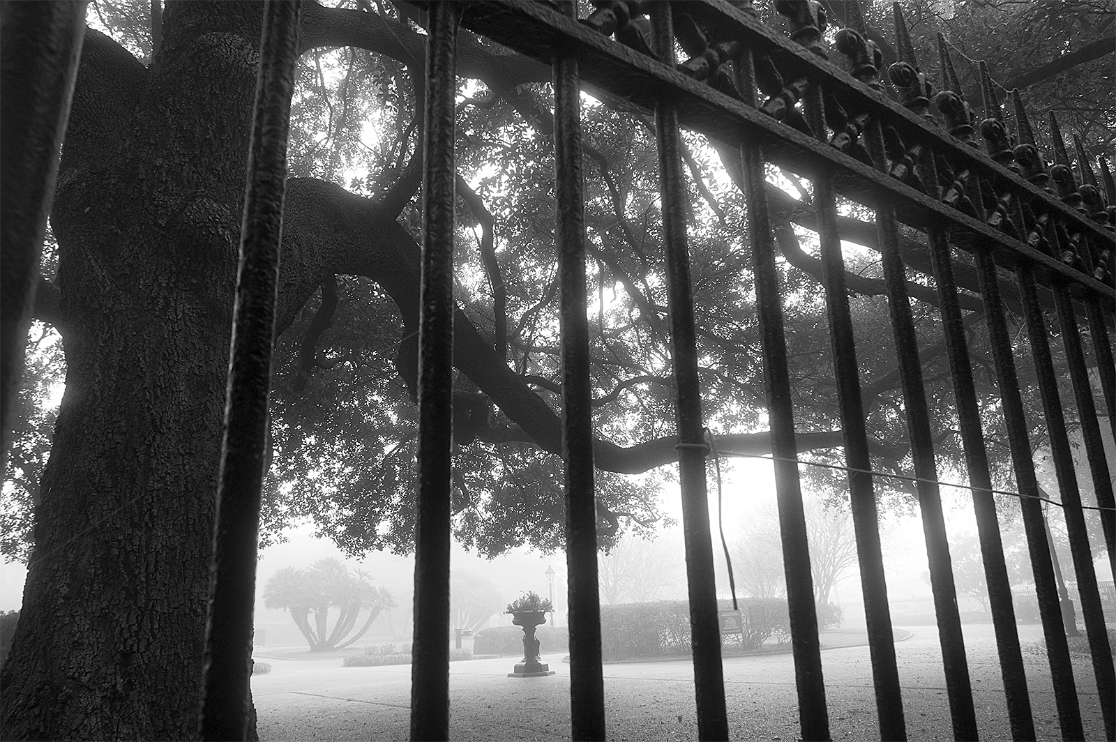 Jackson Sq Fog 1web