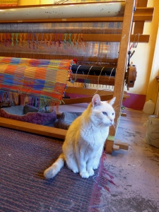 A Loom Works cat sits ready to greet visitors.