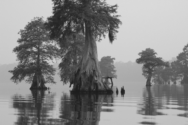 Swamp in morning mist. Image from Pixabay.