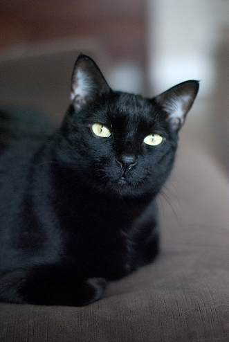 Black Cat. Photograph by Ann Fisher.