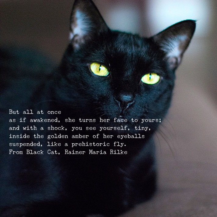 Fun with Word Swag. My cat Coco poses for Rilke's Black Cat.