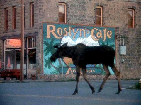 Northern Exposure, a quirky TV show about a Jewish doctor who gets stuck in a small Alaskan town.