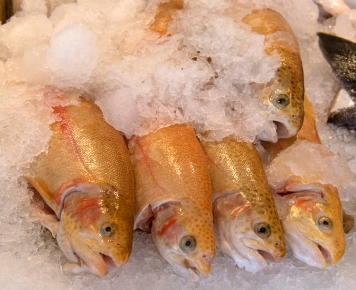 Golden rainbow trout at the Pike Place Market