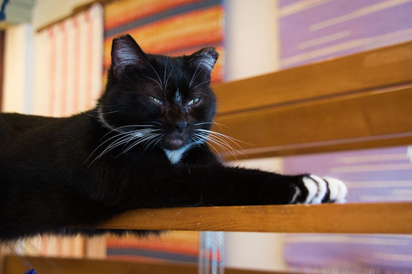 Black cat lounging on a loom