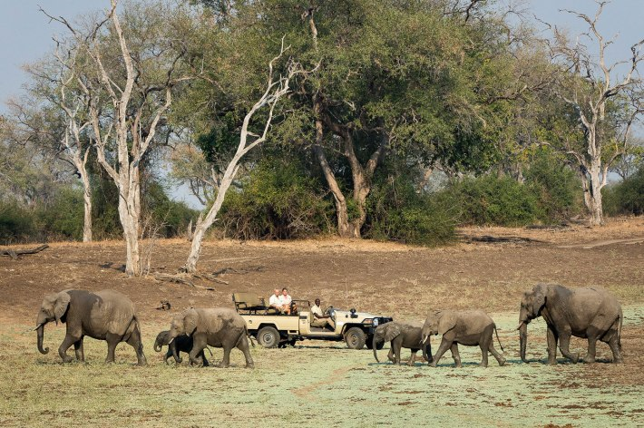 Elephant sighting in the Luangwa River preserve.