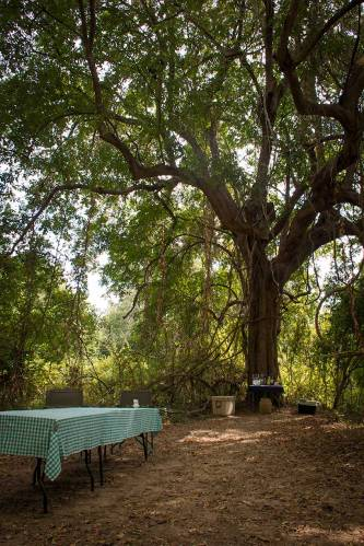 Luangwa Bush Camp Robin Pope Safaris