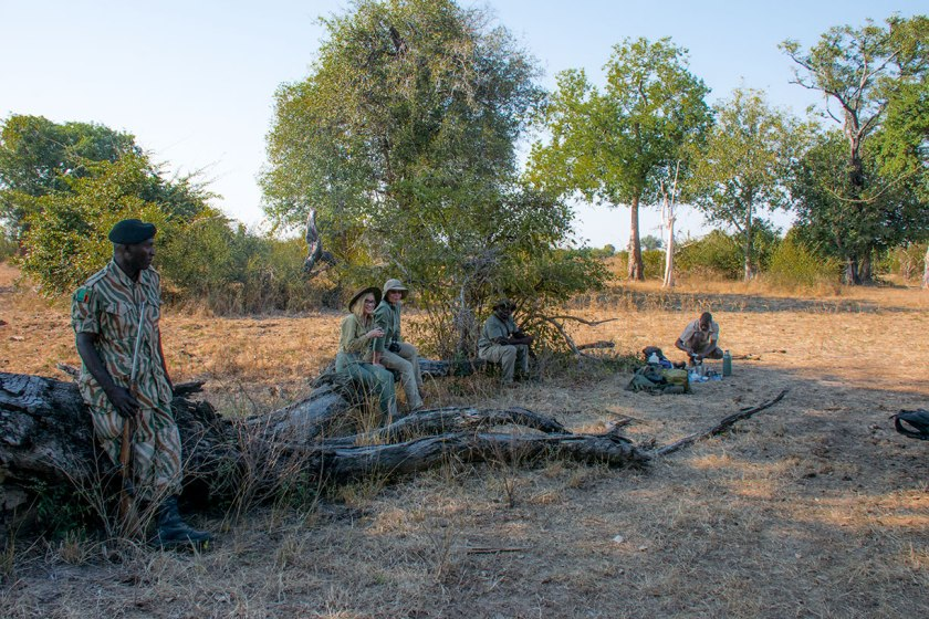 Luangwa Bush Camp walking safari Robin Pope Safaris