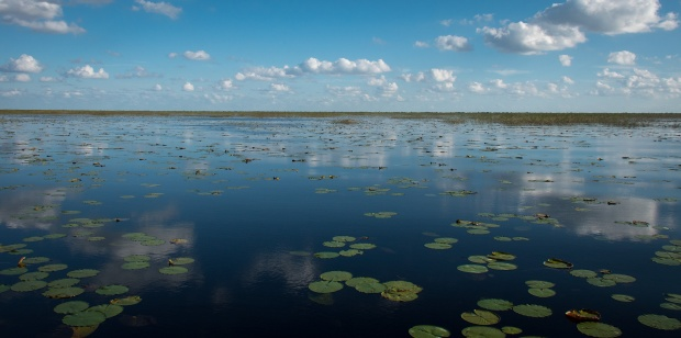 Airboat ride into the Everglades