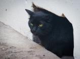 Howard Hughes the Hemingway cat