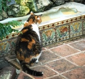 """After the fight with Pauline about the extreme expense of her new swimming pool, Hemingway dragged a discarded urinal home from Sloppy Joe's to use as a watering hole for the cats. Pauline was incensed and told him she wouldn't have it in the yard. He replied, """"I'll get rid of my pool when you get rid of yours."""" And here it still is -- Pauline had it prettied up with decorative tile."""