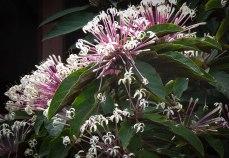 The flowers in Terre de Haut were gorgeous.