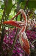 Strange hairy ginger Balata gardens