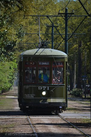 Streetcar on Carrollton Avenue in New Orleans.