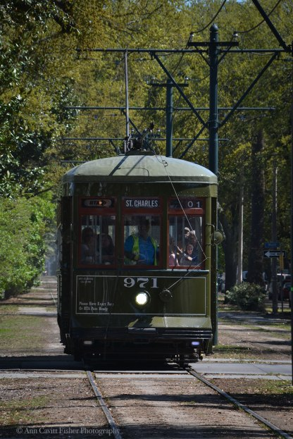 Streetcar on Carrollton Avenue in New Orleans.